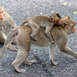 Wickedness monkey, Pattaya, Thailand - Stock Photo