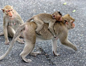 Wickedness monkey, Pattaya, Thailand — Stock Photo