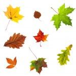Photo of autumn leave — Stock Photo