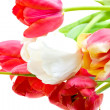 Colored tulips isolated over white — Stock Photo