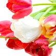 Stock Photo: Colored tulips isolated over white