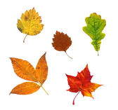 Photo of various autumn leaves — Stock Photo