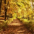 Autumn, fall background - Stockfoto