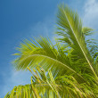 Royalty-Free Stock Photo: Branch of a palm tree in the  blue sky