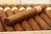 Box of Cuban Cigars — Stock Photo
