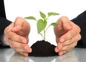 Business men a plant between hands — Stock Photo