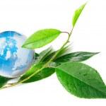 The globe concept eco — Stock Photo