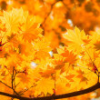 Autumn, yellow leaves — Stock Photo #1667709