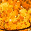 Stock Photo: Autumn, yellow leaves