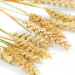 Grain ears — Stock Photo