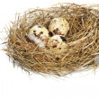 Egg in real nest — Stockfoto #1669450