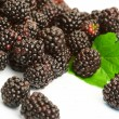 Dewberry - Stock Photo