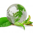 Stock Photo: Globe concept eco