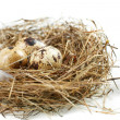 Foto Stock: Egg in real nest