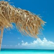 On a tropical island,  cuba - Stockfoto