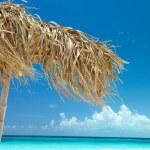 On a tropical island, cuba — Stock Photo