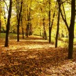 Autumn, fall background - Foto de Stock  
