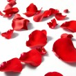 Stock Photo: Petals of rose, on white background.