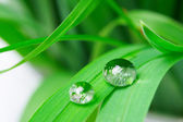 Drops with green grass — Stockfoto