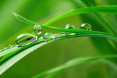 Drops with green grass — Stock Photo
