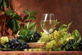 White dry wine, fresh clusters of grapes — Stock Photo
