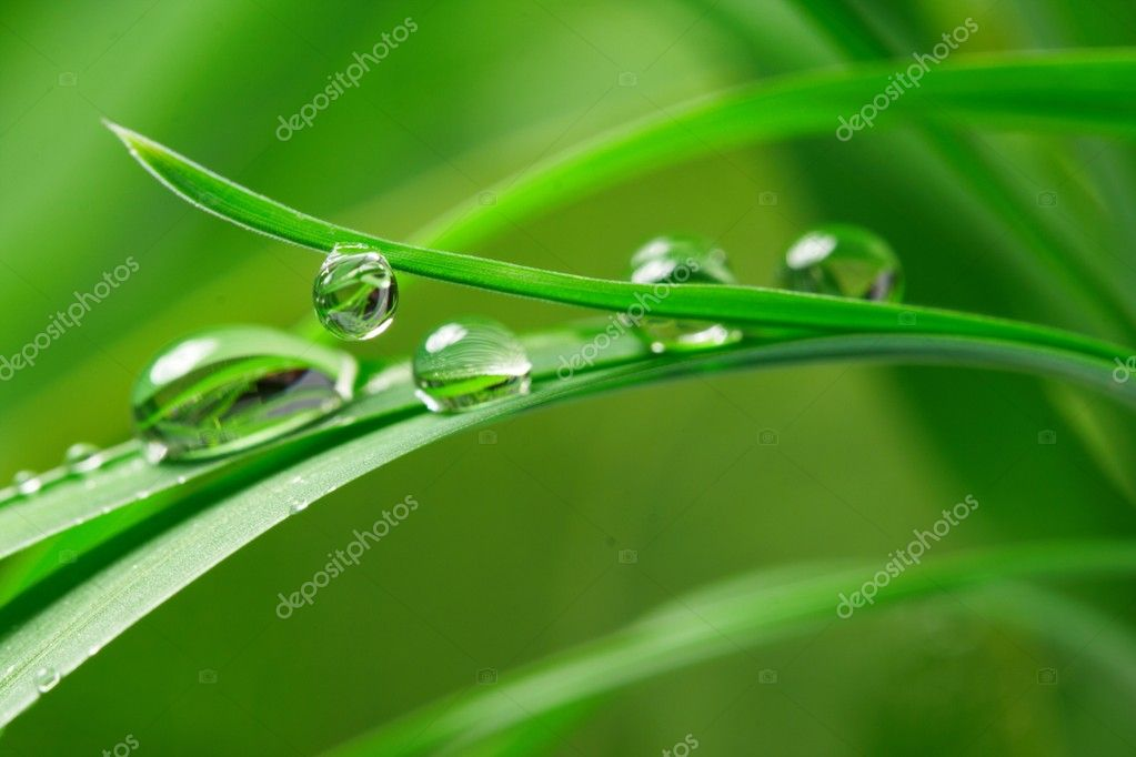 Drops with green grass — Stock Photo #1755632