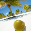 Palm tree with a coconut — Stock Photo