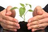 Business men a plant between hands — Stock Photo