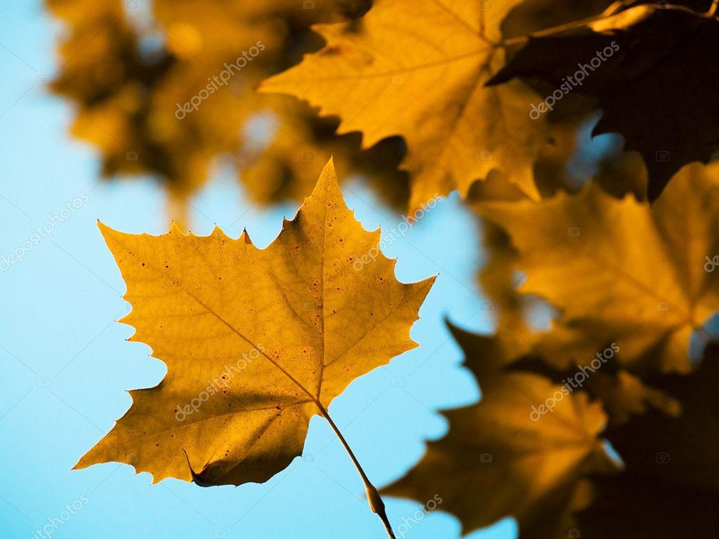 秋天的树叶– 图库图片