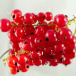 Redcurrant - Stock Photo