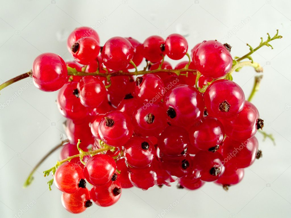 Redcurrant  Photo #1696466