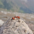 Stock Photo: Ladybugs