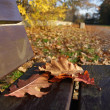Leaves on bench in park — Stock Photo