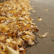 Stock Photo: Gold leaves near street