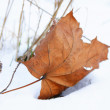 Brown leaf in snow — Stock Photo