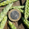 Ear of wheat and one euro — Stock Photo #2036256