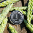 Ears of wheat and one zloty — Stock Photo