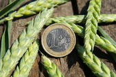 Ear of wheat and one euro — Stock Photo