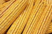 кукуруза — Стоковое фото