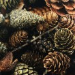 Pine cones — Stock Photo #1765293