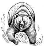 Grizzly medvěd hnědý — Stock fotografie