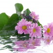 Flowers with reflection — Stock Photo