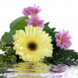 Bouquet with reflection isolated on whit — Stock Photo
