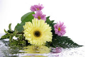 Bouquet with reflection isolated on whit — Stok fotoğraf