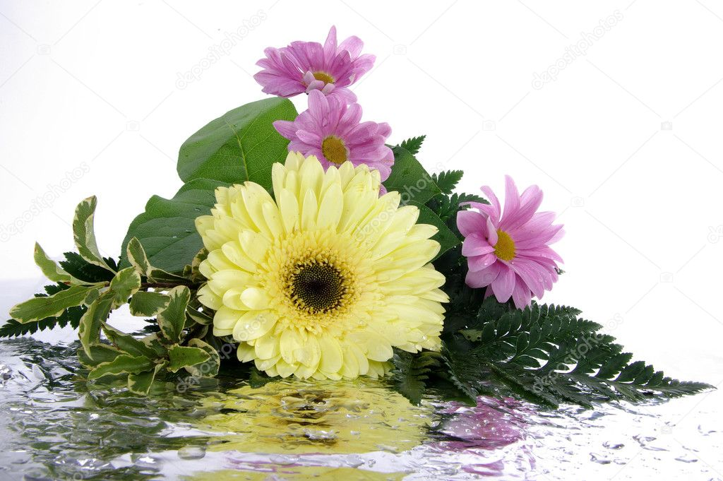 Bouquet with reflection isolated on white  Stock Photo #2153282