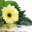 Photo: Yellow flower and leafs isolated on whi