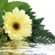 图库照片: Yellow flower and leafs isolated on whi