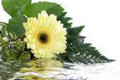 Sarı çiçek ve yaprakları üzerinde izole whi — Stok fotoğraf