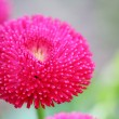 Pink flower — Stock Photo #1686328
