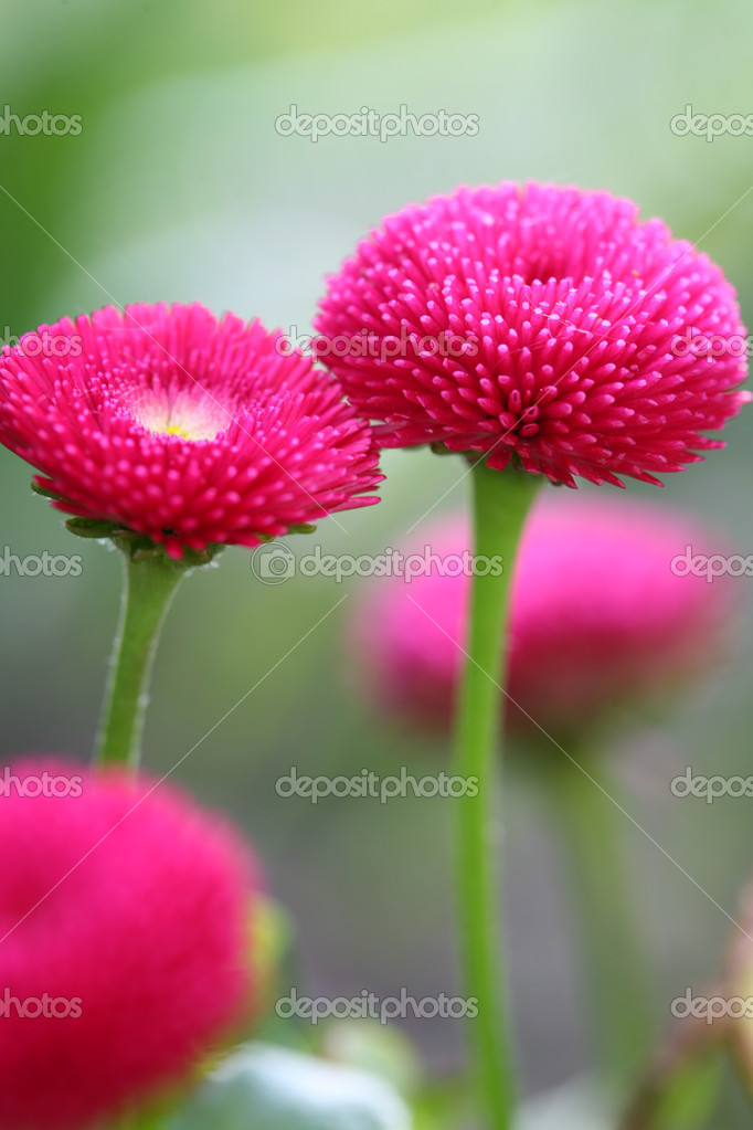 Pink flower — Stock Photo #1686339